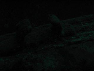 20121103-161743